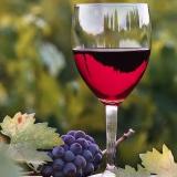 """Vini dell'Emilia Romagna: Casali Viticultori protagonista di """"Cantine Aperte"""""""