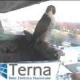 Ambiente e Fauna: Terna, ad Flavio Cattaneo, Sapienza e Ornis Italica per BirCam 2010